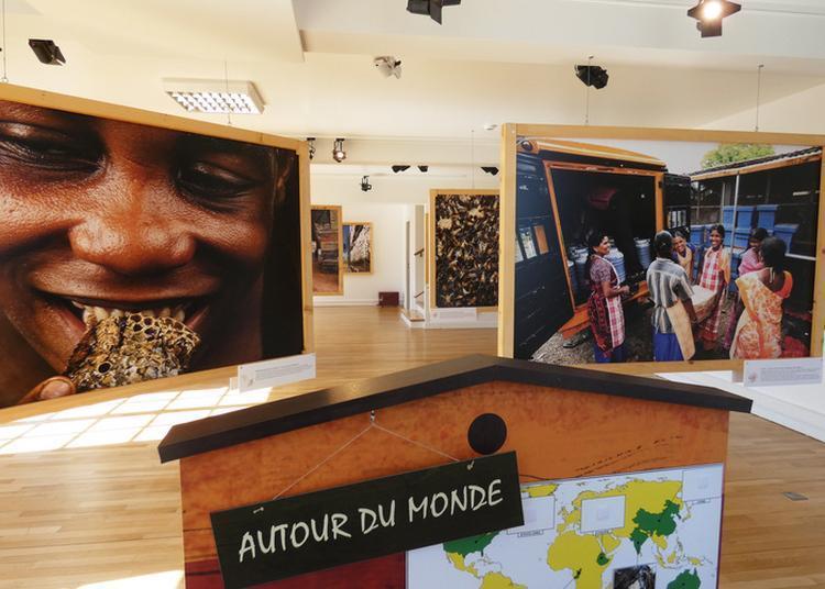 Visite Guidée De L'exposition Abeilles, Une Histoire Naturelle à Le Havre