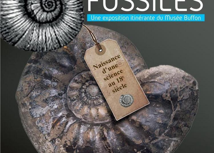 Visite Guidée De L'exposition Fossiles, Naissance D'une Science Au 18e Siècle à Dax