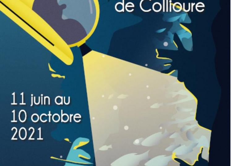 Visite Guidée De L'exposition Temporaire Plongée Au Coeur Des Canyons à Collioure