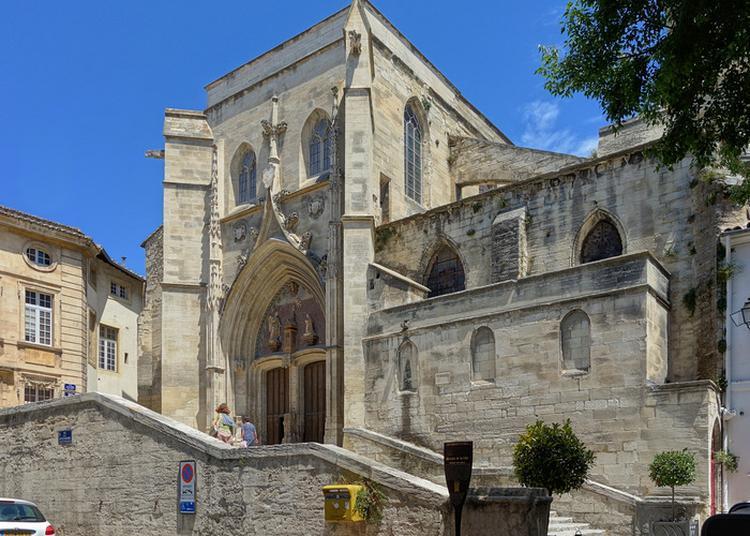 Visite Guidée De La Collégiale Saint-agricol à Avignon