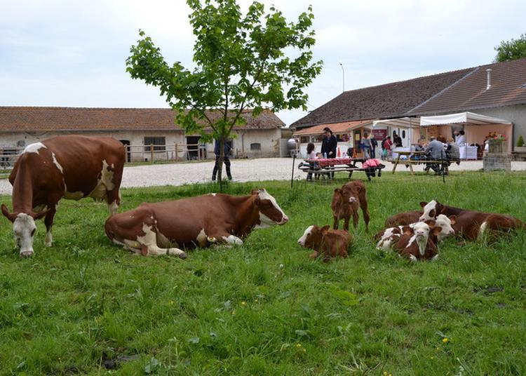 Visite Guidée De La Ferme Bio De L'abbaye Avec Dégustation De Nos Produits. à Le Plantay