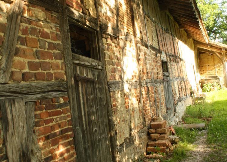 Visite Guidée De La Ferme Du Sougey. à Montrevel en Bresse