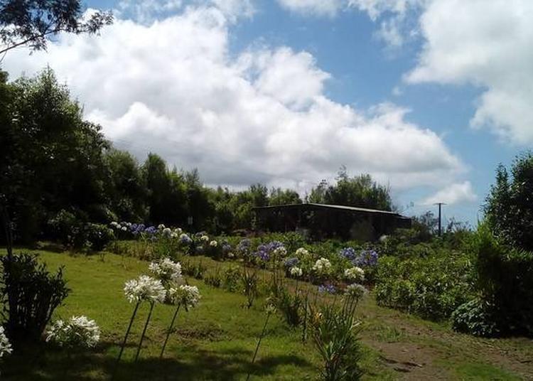 Visite Guidée De La Plantation De Thé Et De Géranium à Saint Joseph