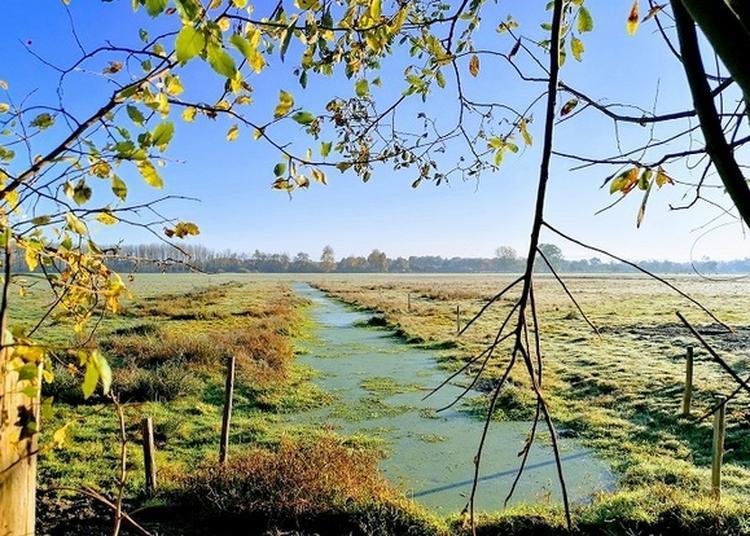 Visite Guidée De La Réserve Naturelle Régionale Du Marais De Sougeal