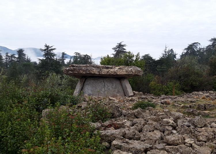 Visite Guidée Des Dolmens à Auriolles