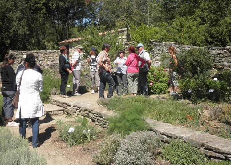 Visite Guidée Des Jardins Ethnobotaniques à Rousson