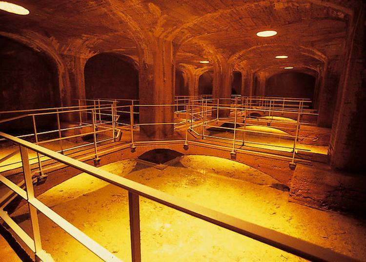Visite Guidée Des Sources De Cérilly à Cerilly