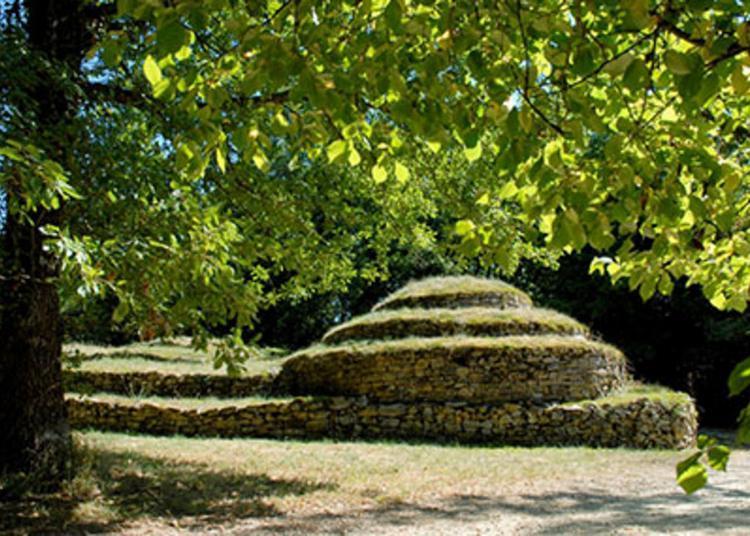 Visite Guidée Des Tumulus à Bougon