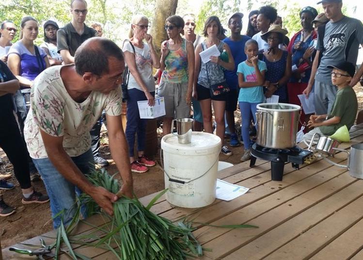 Visite Guidée Du Jardin Créole Productif Du Domaine Pascaud à Remire Montjoly