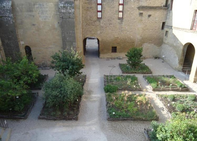 Visite Guidée Du Jardin Des Simples à Salon de Provence