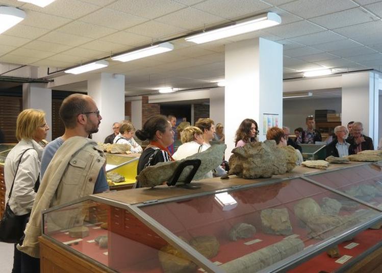 Visite Guidée Du Musée De Géologie à Caen