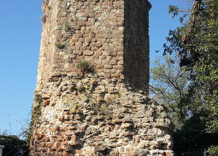 Visite Guidée Du Port Romain à Frejus