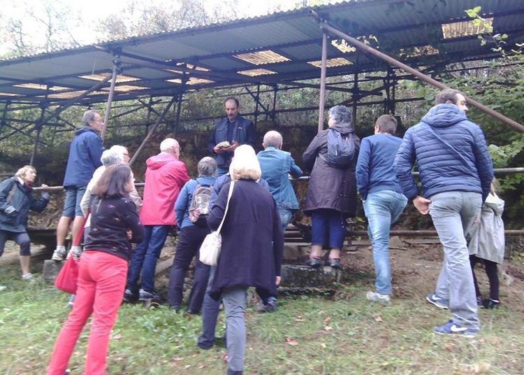 Visite Guidée Du Site Archéologique De La Bouffia Boneval à La Chapelle aux Saints