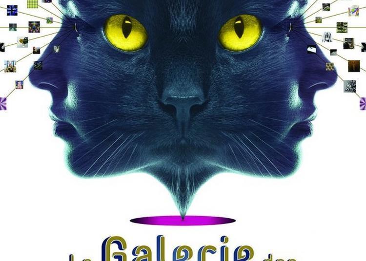 Visite Guidée En Continu De L'exposition La Galerie Des Illusions à Blois