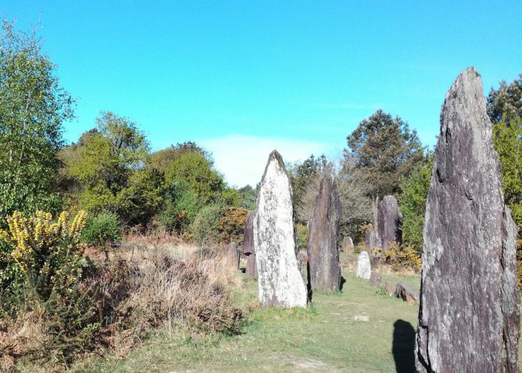 Visite Guidée Et Balade Nature à Monteneuf