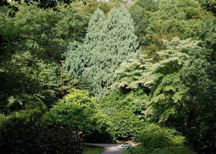 Visite Guidée Histoires D'arbres Remarquables à Brest