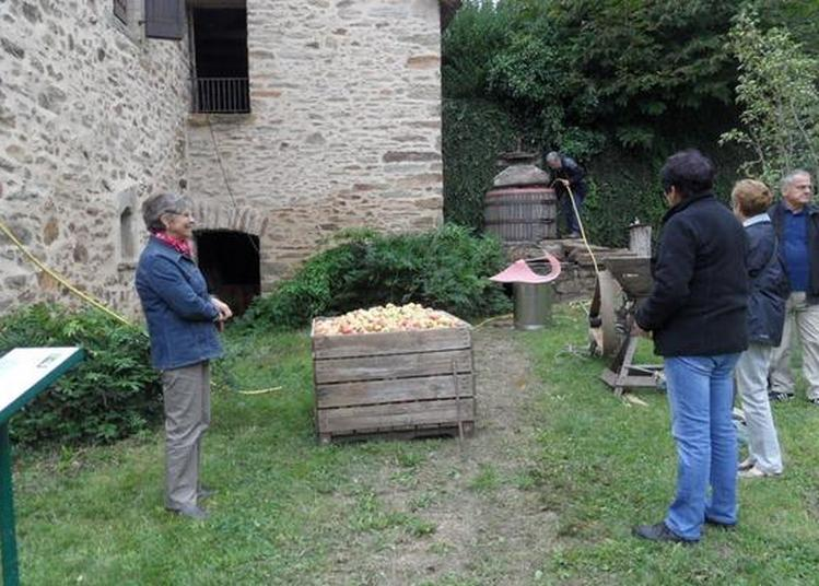 Visite Guidée : Partage Et Convivialité à Durenque