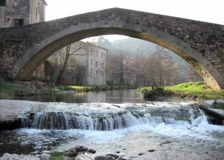 Visite Guidée Regards Croisés Des Berges De La Soulondres. Entre Constructions Et Biodiversité : Habiter, Façonner, Fasciner Les Rivières à Lodeve