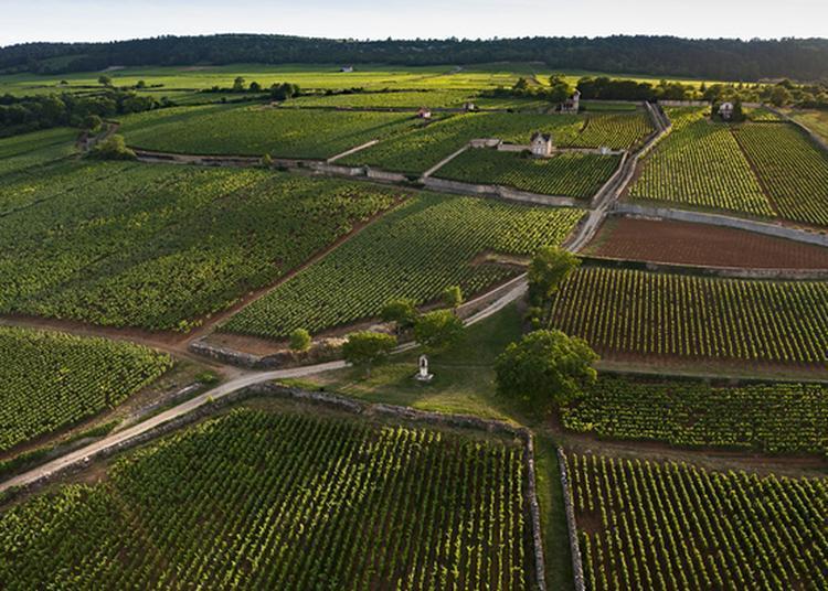Visite : Les Climats De Bourgogne, Un Patrimoine Mondial à Bordeaux
