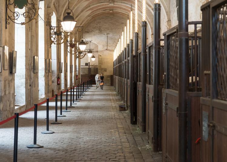Visite Libre De L'académie équestre Nationale Du Domaine De Versailles
