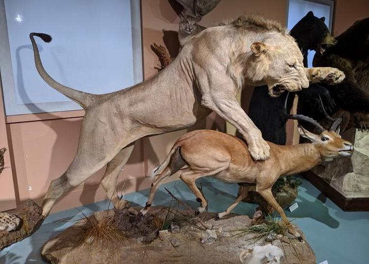 Visite Libre De L'exposition Permanente Consacrée Aux Collections D'histoire Naturelle à Tours