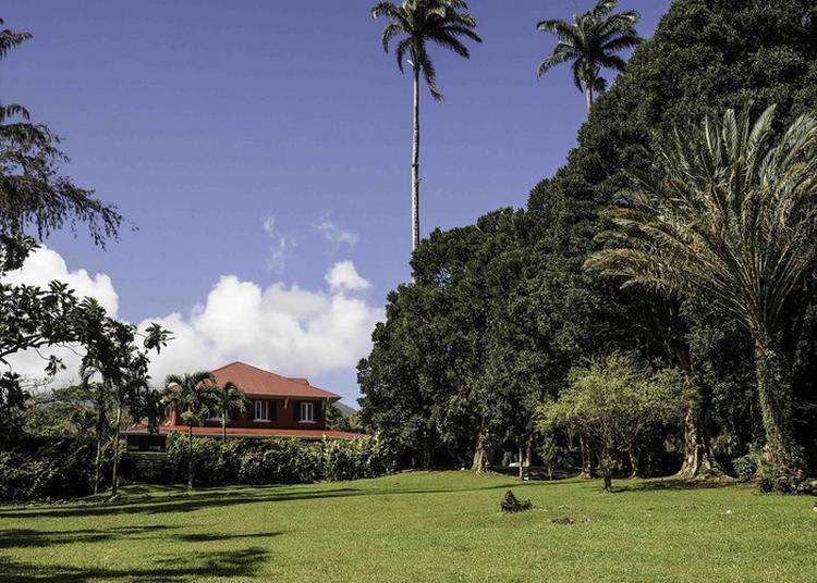 Visite Libre De L'habitation Bellevue à Macouba