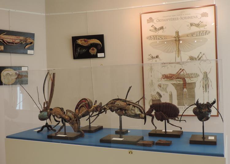 Visite Libre Des Collections à Le Neubourg