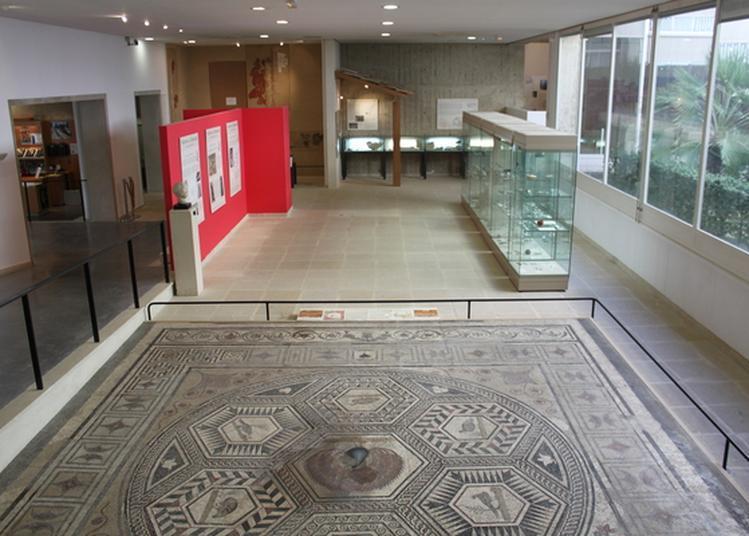 Visite Libre Des Collections Du Musée à Vaison la Romaine