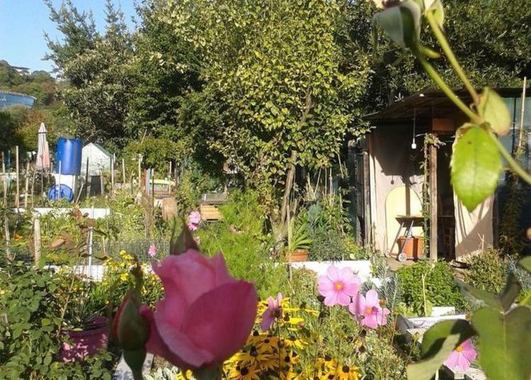 Visite Libre Des Jardins Familiaux De La Pointe De L'île à Issy les Moulineaux