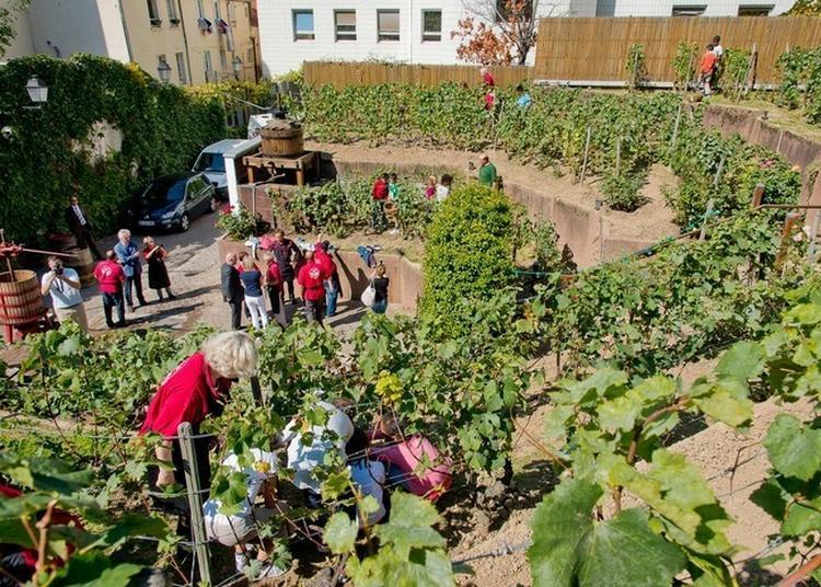 Visite Libre Du Chemin Des Vignes à Issy les Moulineaux