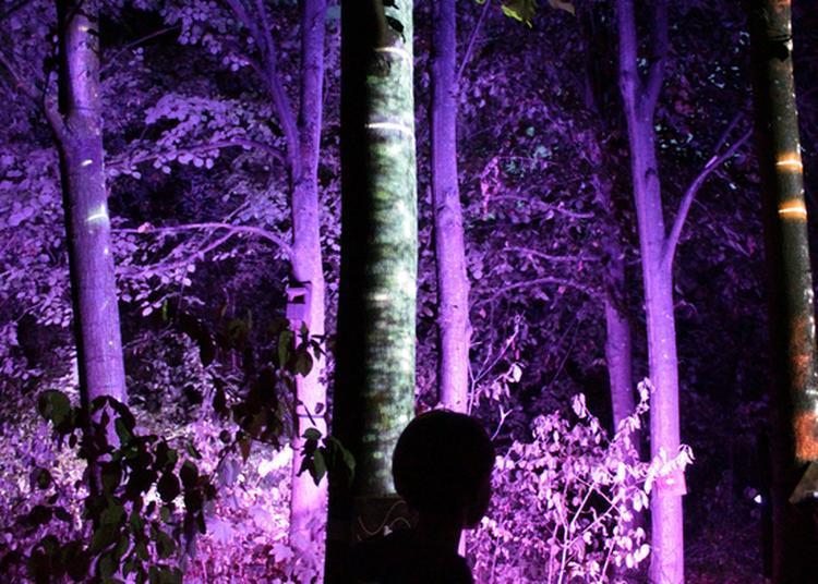 Visite Libre Du Jardin Et Découverte De Rêverie Sous L'arbre à Roubaix