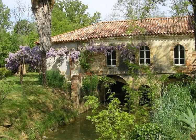 Visite Libre Du Moulin à Saint Sulpice sur Leze