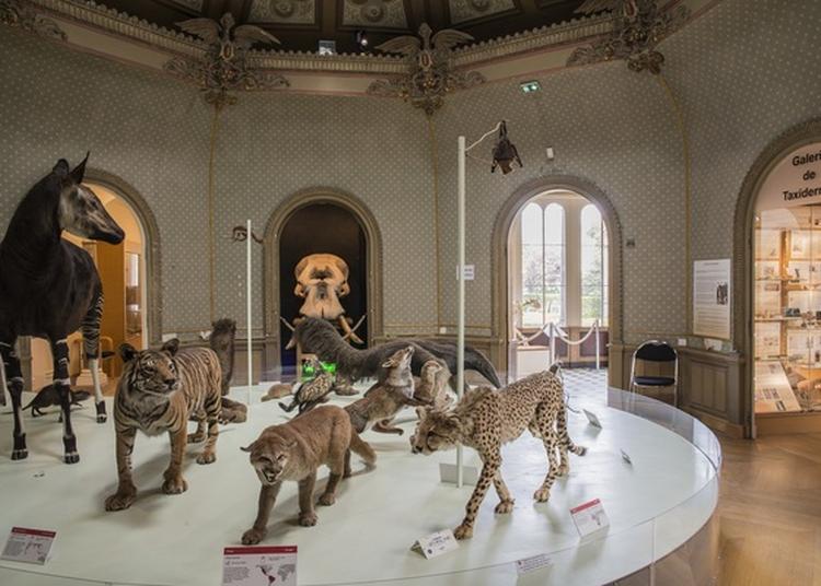 Visite Libre Du Musée- Muséum des sciences naturelles à Angers