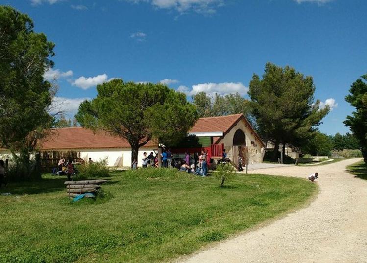 Visite Libre Du Musée De La Camargue à Arles