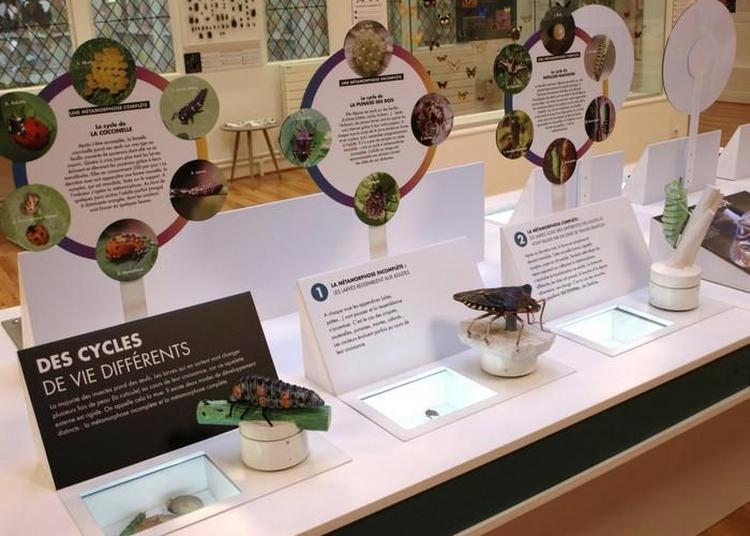 Visite Libre Du Musée Des Papillons à Saint Quentin