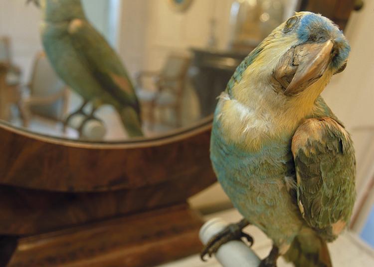 Visite Libre Du Musée Flaubert et d?histoire de la medecine à Rouen