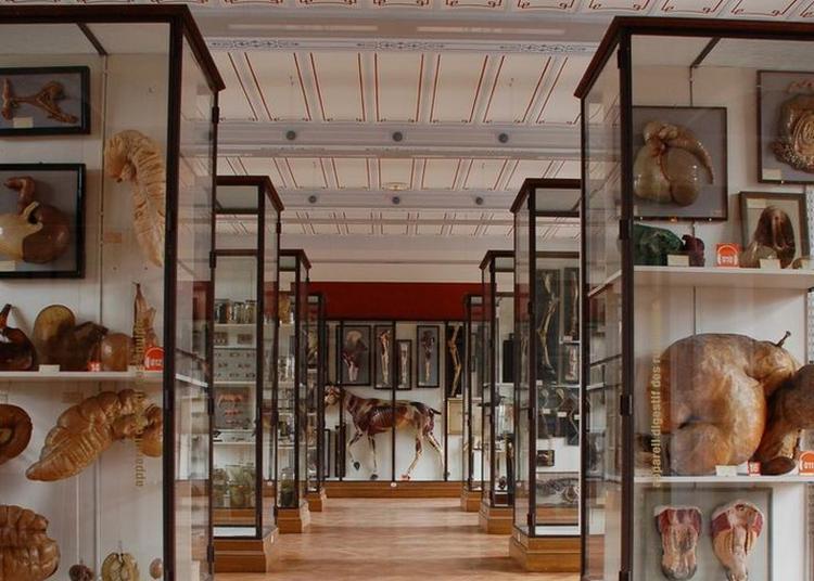 Visite Libre Du Musée Fragonard à Maisons Alfort