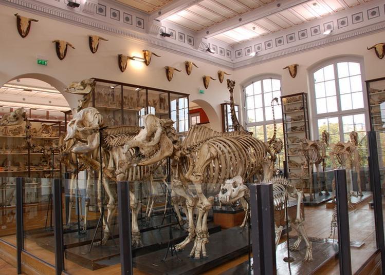 Visite Libre Du Musée Fragonard De L'École Nationale Vétérinaire D'alfort à Maisons Alfort
