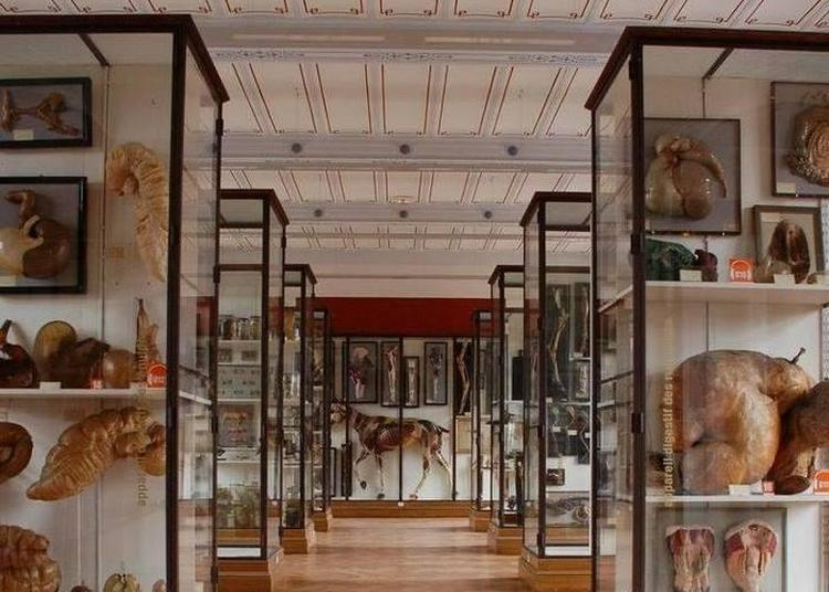 Visite Libre Du Musée Fragonard De L'École Vétérinaire De Maisons-alfort à Maisons Alfort