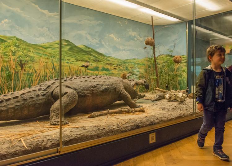 Visite Libre Du Musée Zoologique à Strasbourg