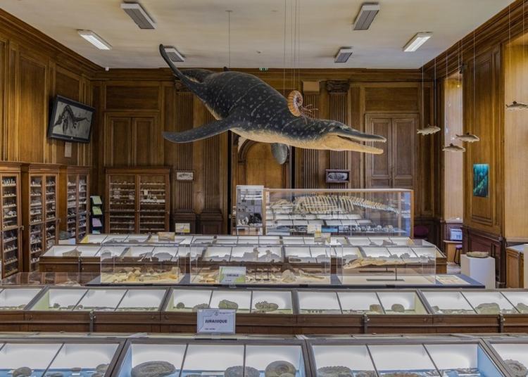 Visite Libre Du Muséum Des Sciences Naturelles à Angers