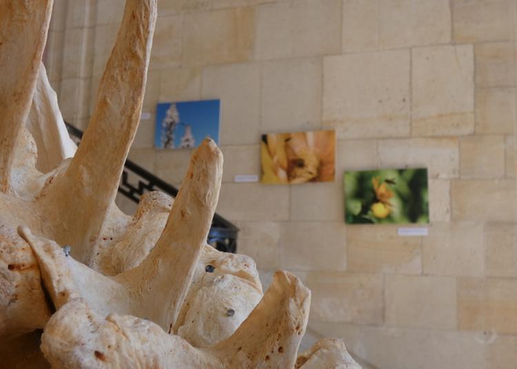 Visite Libre Du Muséum Du Havre à Le Havre