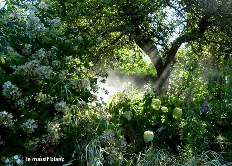 Visite Libre Ou Commentée Du Jardin De Cassandra à Saint Martin d'Auxy