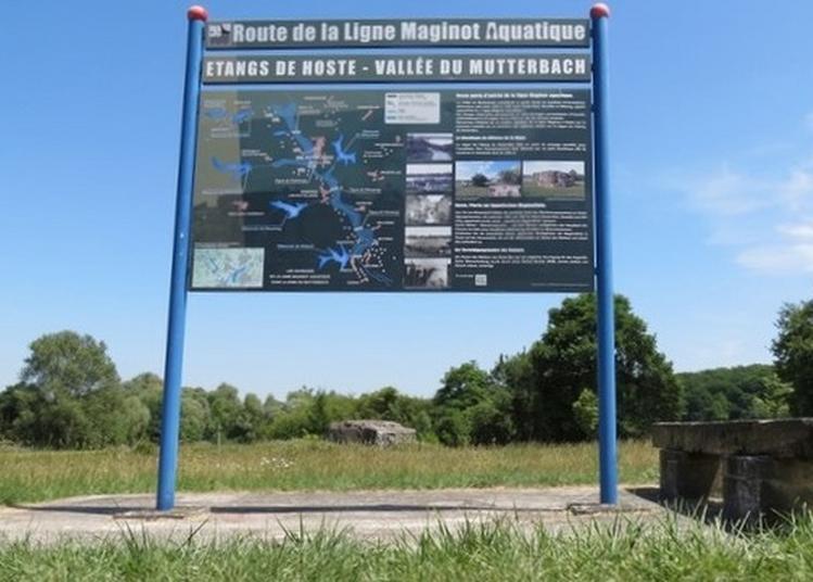Visite Libre Ou Commentée : La Ligne Maginot Aquatique à Hoste