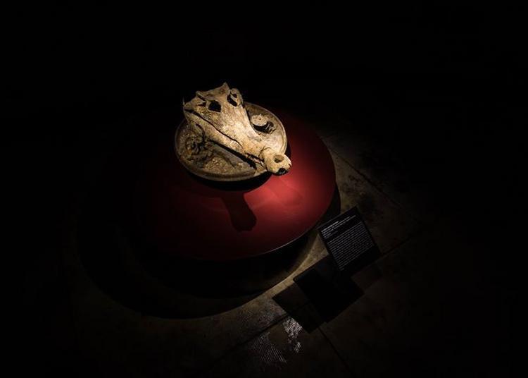 Visite nocturne à la lampe torche à Strasbourg