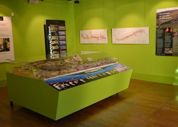 Visite Thématique : Les Climats Du Vignoble De Bourgogne à Beaune