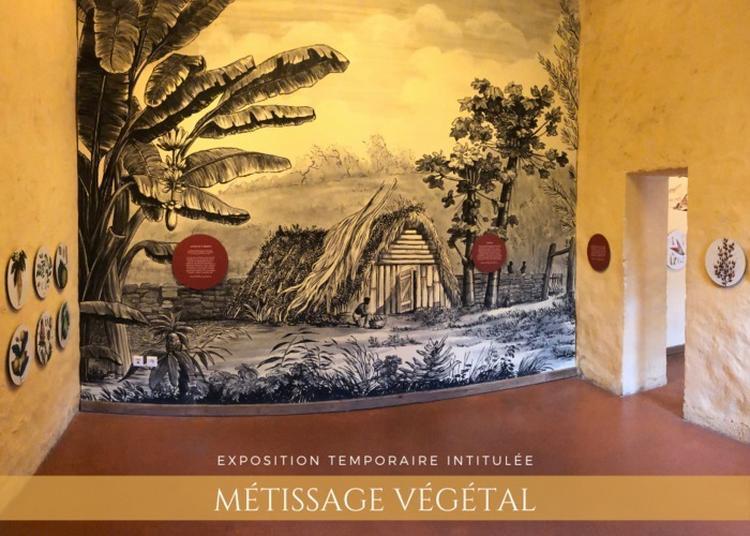 Visite Thématique Métissage Végétal à La Possession