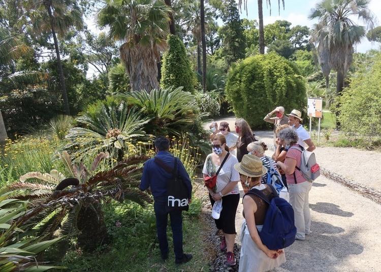 Visites Découvertes Du Jardin Botanique Thuret Inrae à Antibes