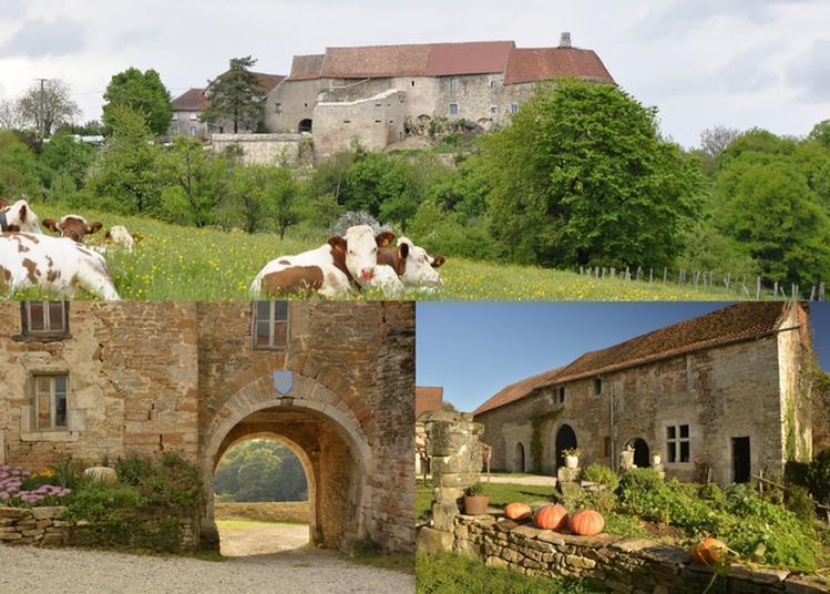 Visites Du Château De Montby, Animations Médiévales, Jeux En Bois, Restauration à Gondenans Montby