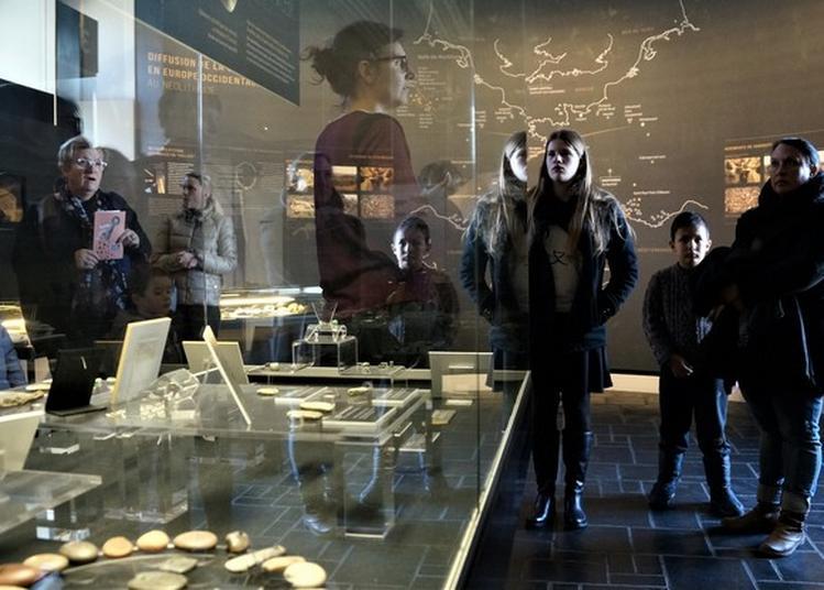 Visites Guidées Des Collections à Carnac